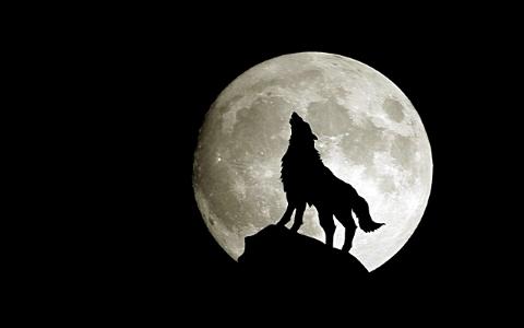 Wolf-Moon-fantasy-28637592-1920-1200-s